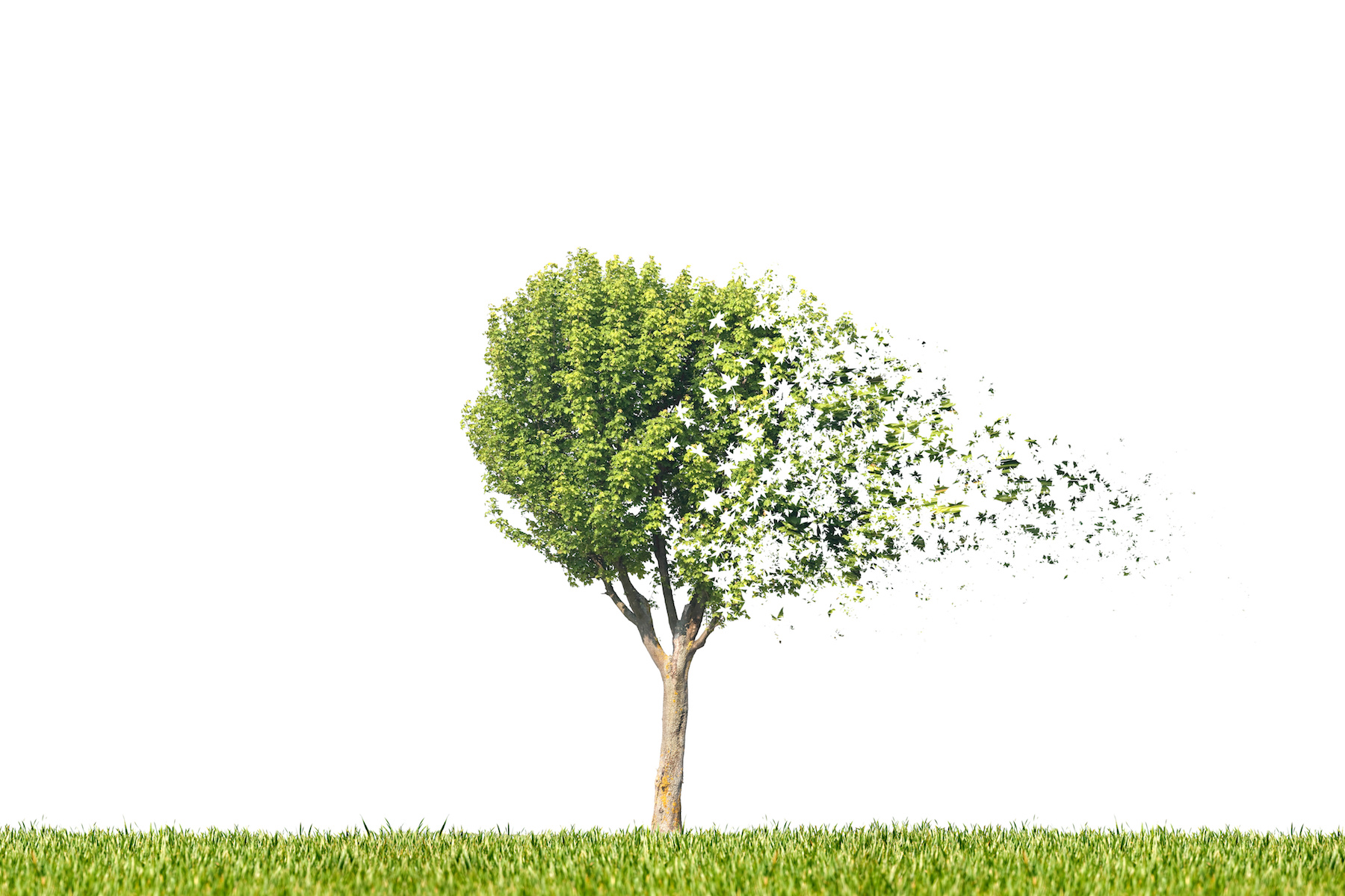 Why Is Your Tree Losing Leaves Tree Health Tips